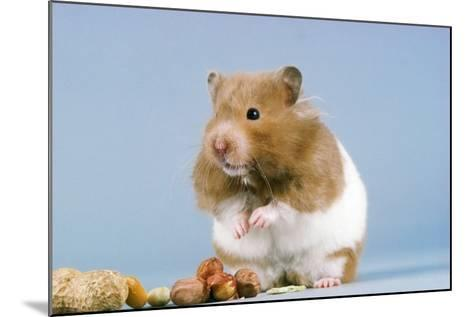 Hamster and Nuts--Mounted Photographic Print