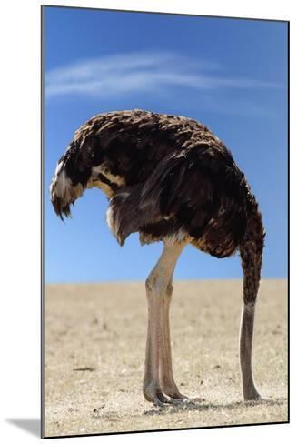 Ostrich with Head in Sand--Mounted Photographic Print