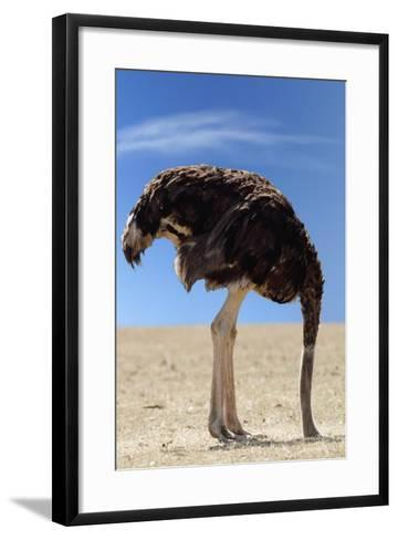 Ostrich with Head in Sand--Framed Art Print