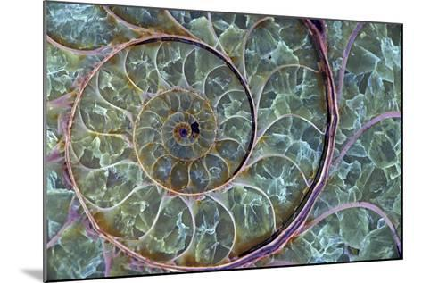 Fossil Ammonite--Mounted Photographic Print
