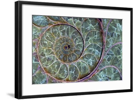 Fossil Ammonite--Framed Art Print