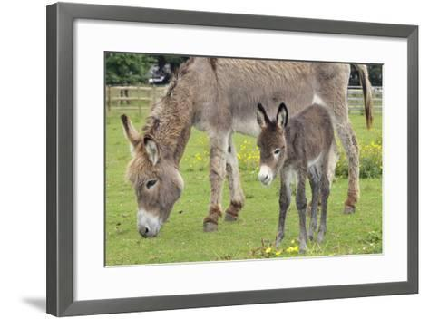 Donkey Adult and 5 Days Old Baby--Framed Art Print