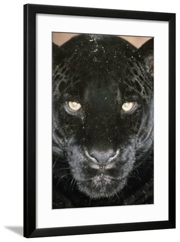 Black Jaguar--Framed Art Print