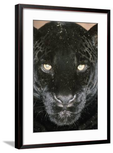 Black Jaguar--Framed Art Print