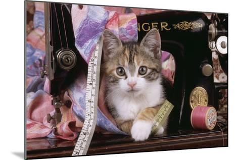 Kitten with Sewing Machine--Mounted Photographic Print