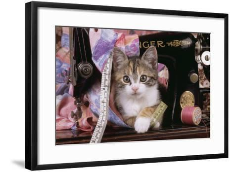 Kitten with Sewing Machine--Framed Art Print
