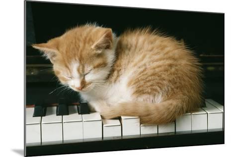 Kitten on Piano-Ginger--Mounted Photographic Print