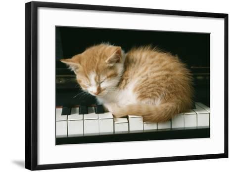 Kitten on Piano-Ginger--Framed Art Print