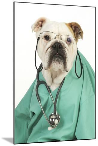 Bullin Vets Scrubs Wearing Glasses and Stethoscope--Mounted Photographic Print