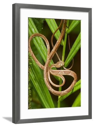 Blunthead Tree Snake--Framed Art Print