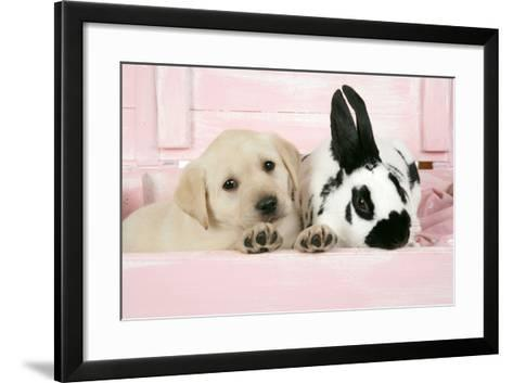 Labrador Retriever Puppy and English Rabbit--Framed Art Print