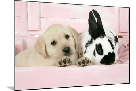 Labrador Retriever Puppy and English Rabbit--Mounted Photographic Print