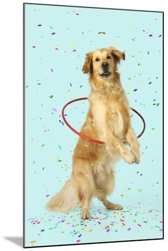 Golden Retriever Doing Hoola Hoop with Falling Confetti--Mounted Photographic Print