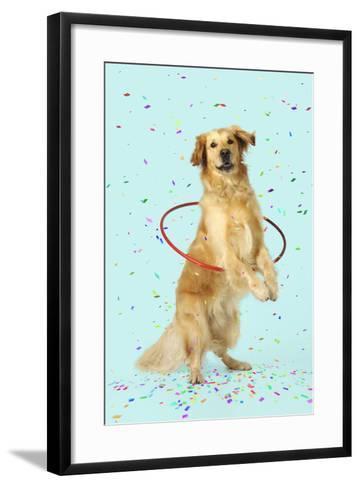 Golden Retriever Doing Hoola Hoop with Falling Confetti--Framed Art Print