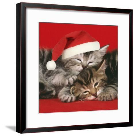 2 Kittens One Sleeping Wearing Christmas Hats--Framed Art Print