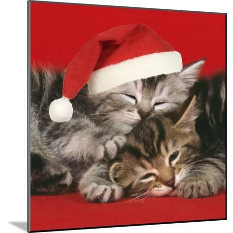 2 Kittens One Sleeping Wearing Christmas Hats--Mounted Photographic Print