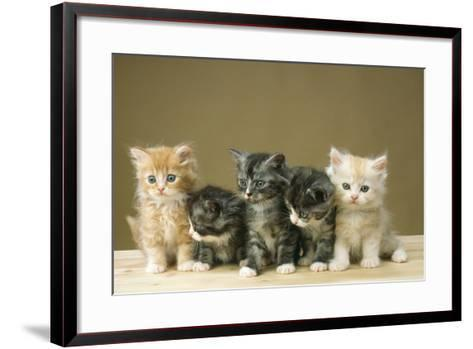 5 Kittens Sitting Together in a Row--Framed Art Print