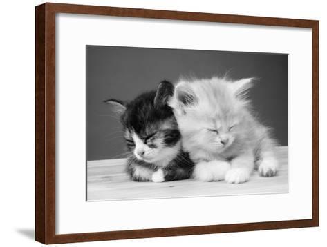 Two Kittens Asleep--Framed Art Print