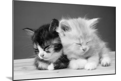 Two Kittens Asleep--Mounted Photographic Print