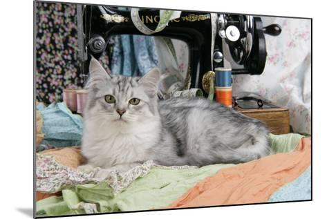 Tiffanie with Sewing Machine--Mounted Photographic Print