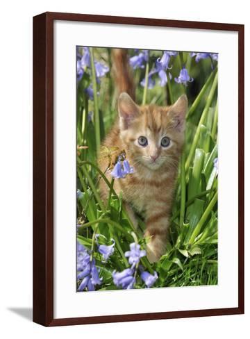 Kitten (Ginger) in Bluebells--Framed Art Print