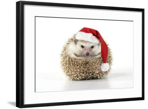 Hedgehog Wearing Christmas Hat--Framed Art Print