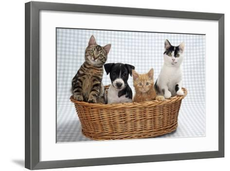Dog and Cats Three Kittens and a Puppy Sitting in Basket--Framed Art Print