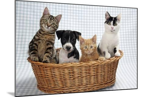 Dog and Cats Three Kittens and a Puppy Sitting in Basket--Mounted Photographic Print