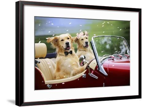 Golden Retriever Dog Wedding Couple in Car with Confetti--Framed Art Print