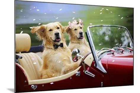 Golden Retriever Dog Wedding Couple in Car with Confetti--Mounted Photographic Print