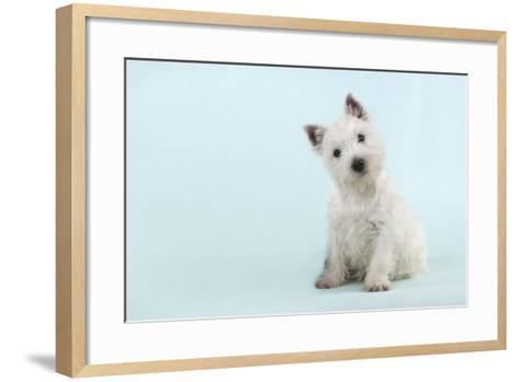 West Highland White Terrier Sitting--Framed Art Print