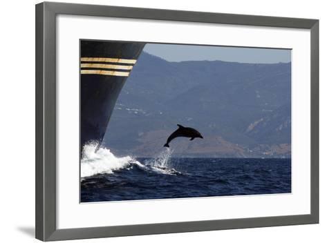 Bottlenose Dolphin Playing--Framed Art Print