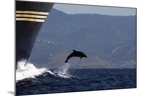 Bottlenose Dolphin Playing--Mounted Photographic Print