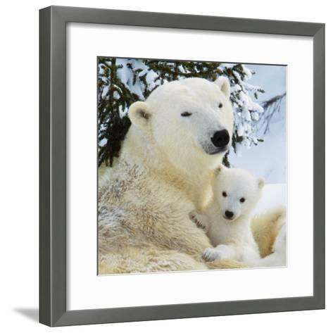 Polar Bear with Cub--Framed Art Print