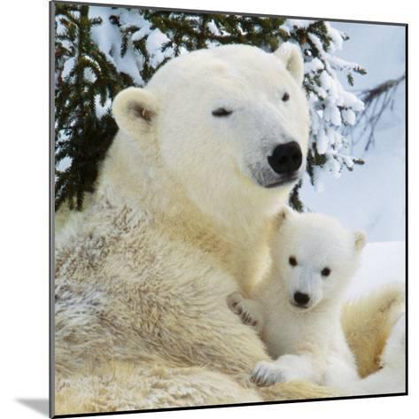 Polar Bear with Cub--Mounted Photographic Print