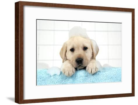 Labrador Retriever Puppy with in Bath with Soap Bubbles--Framed Art Print