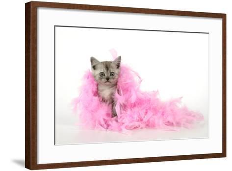 Black Smoke Kitten (8 Weeks) with Pink--Framed Art Print