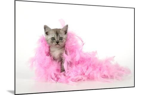 Black Smoke Kitten (8 Weeks) with Pink--Mounted Photographic Print