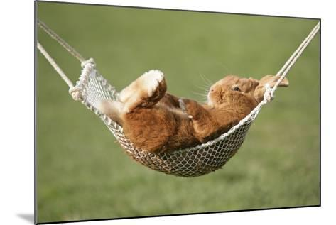 Rabbit Lying Down in a Hammock--Mounted Photographic Print