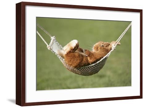 Rabbit Lying Down in a Hammock--Framed Art Print