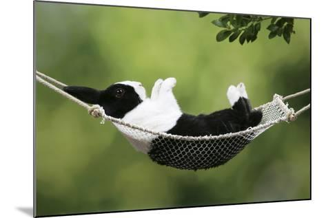Rabbit in a Hammock at Easter--Mounted Photographic Print