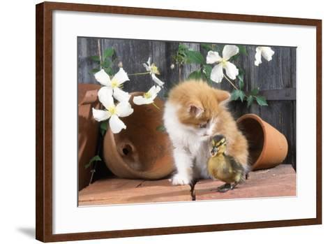 Kitten with Duckling--Framed Art Print