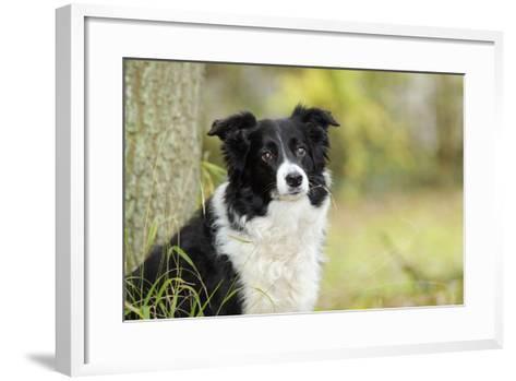 Border Collie in Front of Tree--Framed Art Print