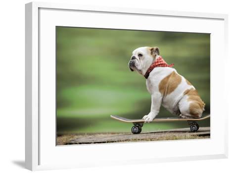 Bulldog on Skateboard--Framed Art Print