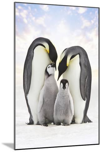 Emperor Penguin, Two Adults with Two Chicks--Mounted Photographic Print
