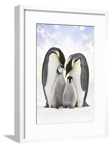 Emperor Penguin, Two Adults with Two Chicks--Framed Art Print