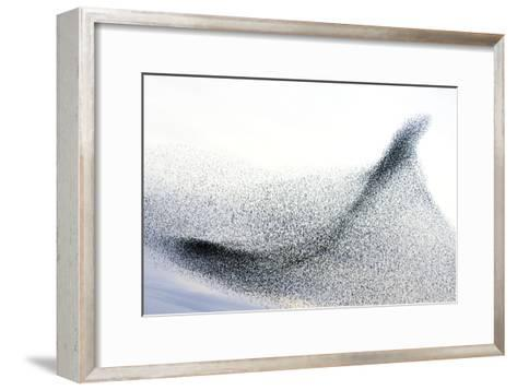 Starlings--Framed Art Print