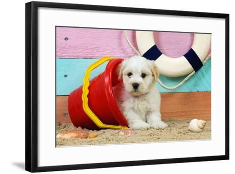 White Teddy Bear Puppy at the Beach in a Bucket--Framed Art Print