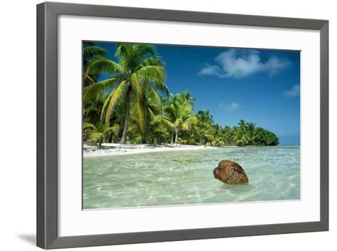 Coconut Floating Ashore on to Tropical Island--Framed Art Print