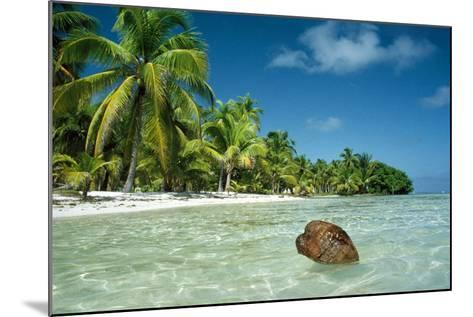 Coconut Floating Ashore on to Tropical Island--Mounted Photographic Print
